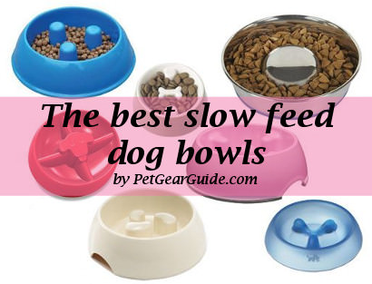 best slow feed dog bowls