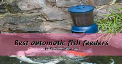 Best automatic pond fish feeder reviews (2021)