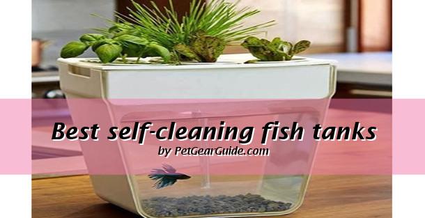 best self-cleaning fish tanks and aquariums