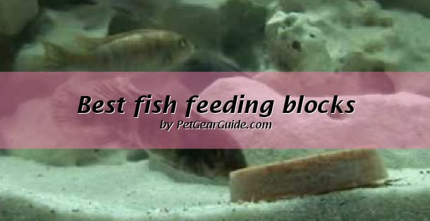 best fish feeding blocks