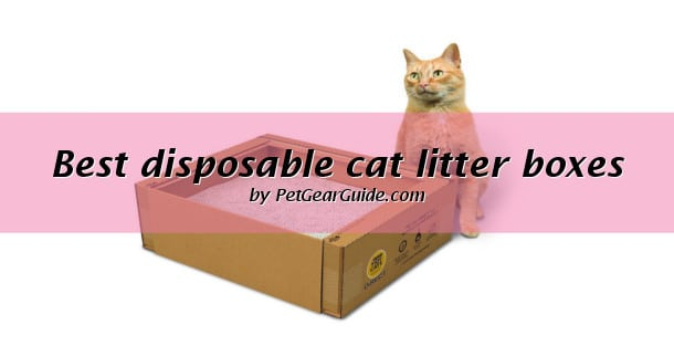 Best disposable cat litter boxes