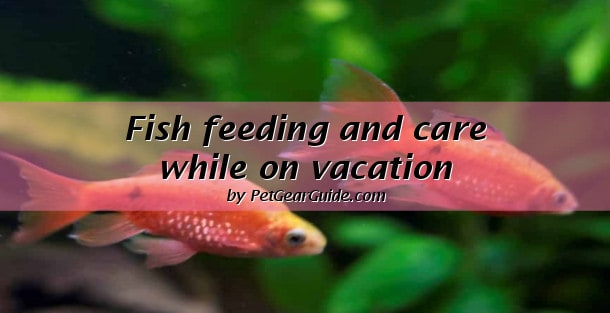Fish feeding and care while on vacations