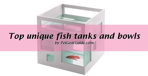 Top unique fish tanks and bowls