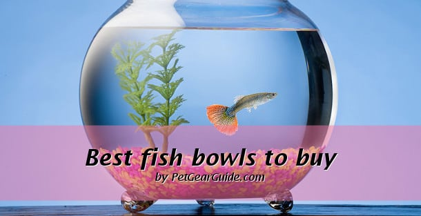 Best fish bowls to buy