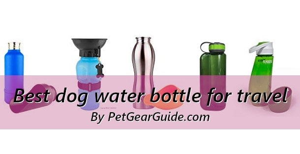 Best dog water bottle for travel and outdoors