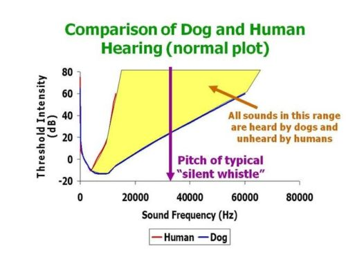 Human and dog hearing frequency comparison