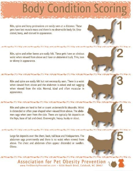 Cat Body Condition Score (Source: APOP)