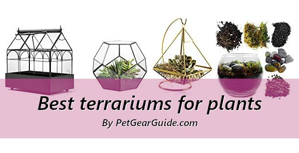 Best terrariums for plants