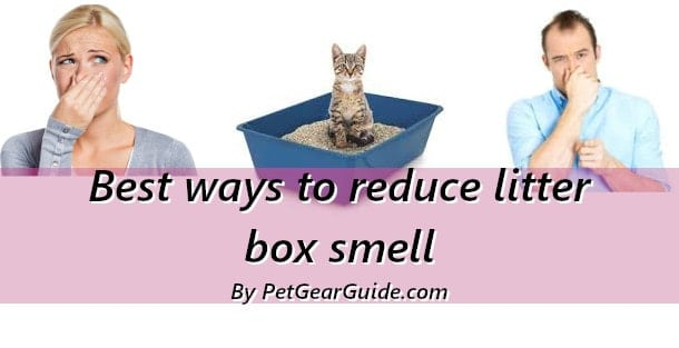 Best ways to reduce litter box smell