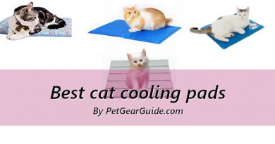 Best cat cooling pads and mats to keep your kitty cool