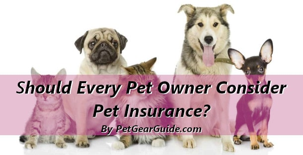 Should Every Pet Owner Consider Insurance